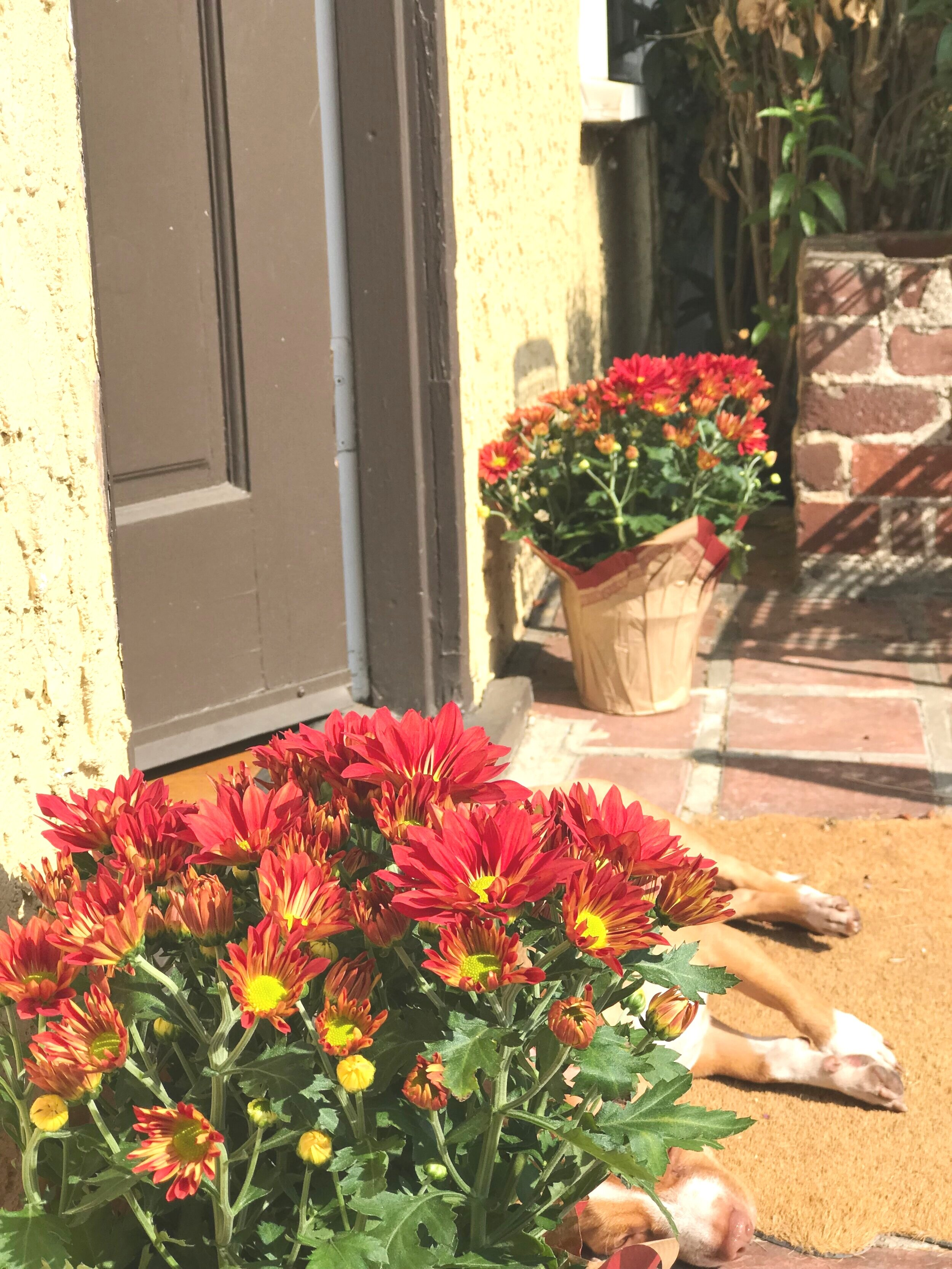 Mums_Front_Porch.jpg