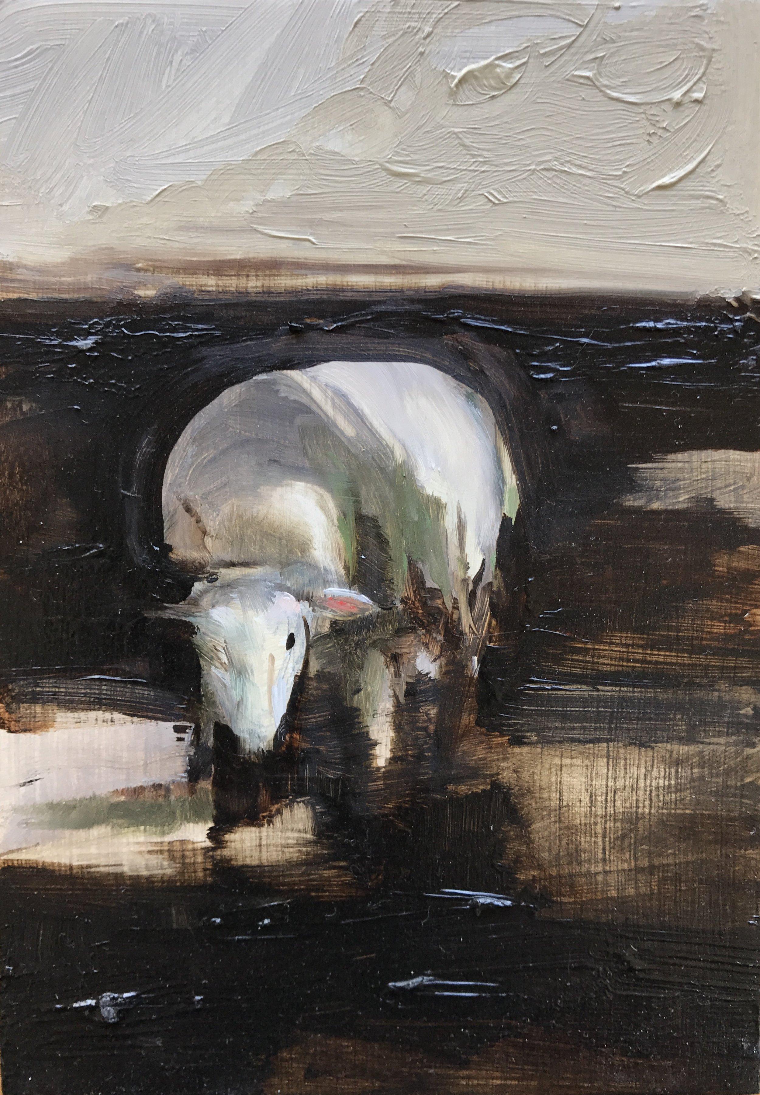 Sheep Up close