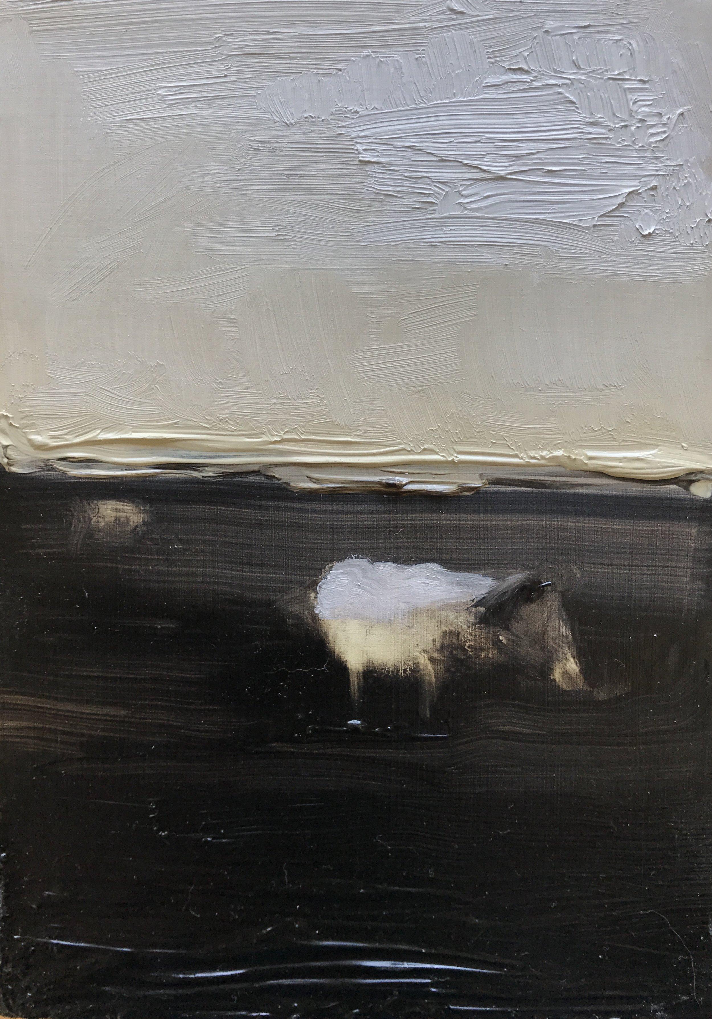 Solo Sheep