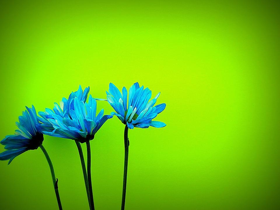 daisies-52596_960_720.jpg