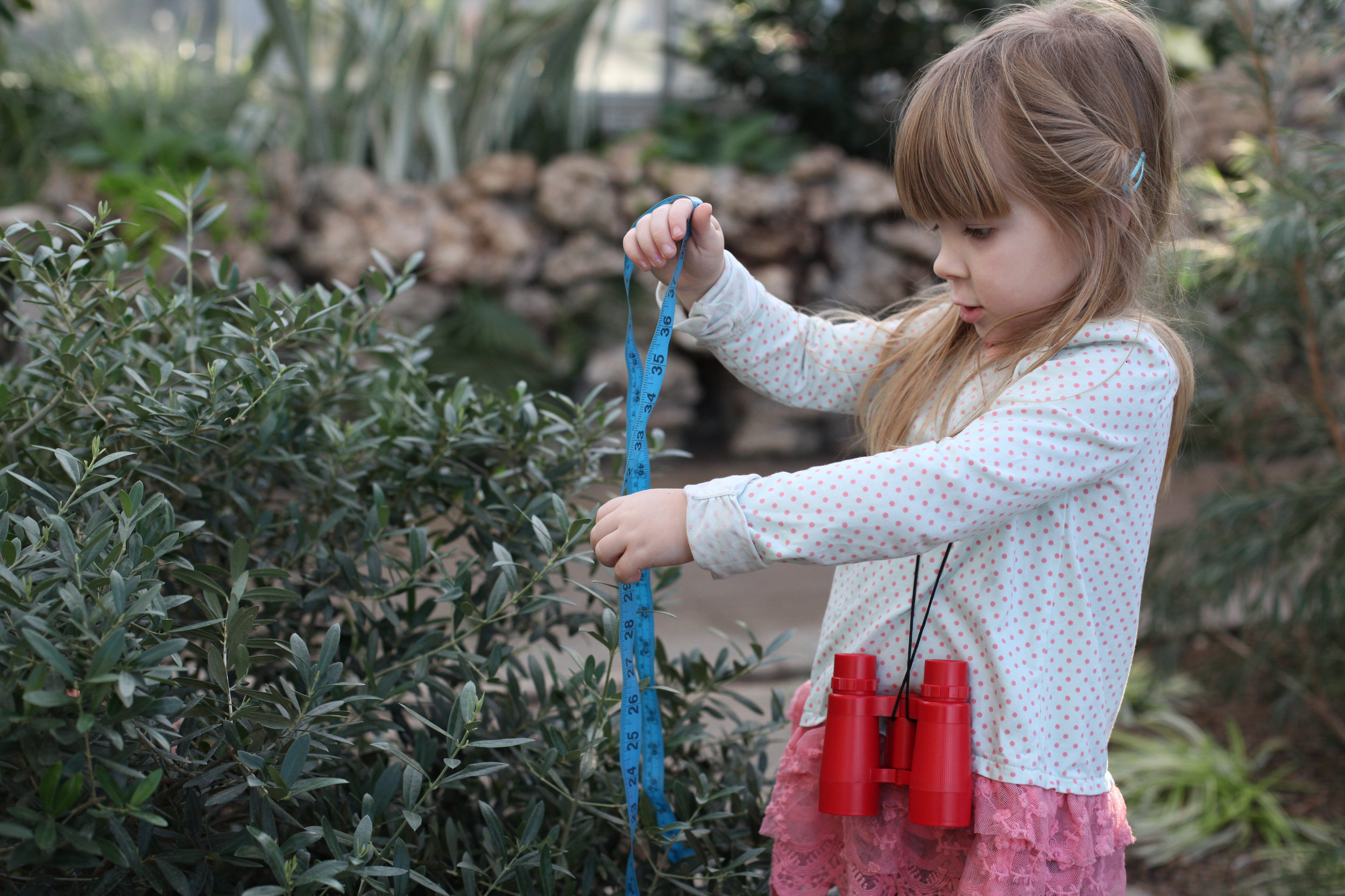 Be sure to stop at the desk and ask for the little explorer bags at Oak Park Conservatory.  They contain binoculars, measuring tape, magnify glass and markers.  Also pickup a clipboard with paper and a scavenger hunt sheet.  So much fun, learning and exploring for the littles--and adults too.