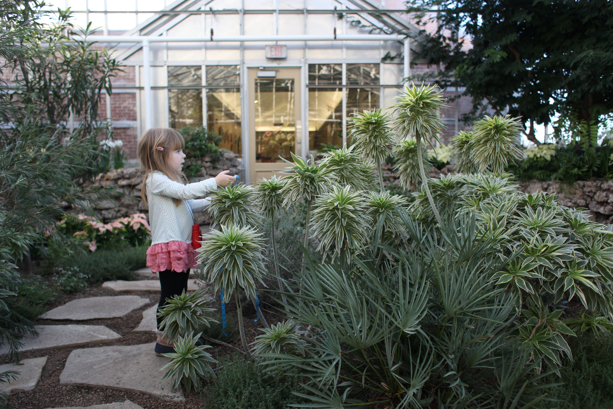 There are 3 main rooms at Oak Park Conservatory. This front room changes with the seasons.  The largest room is a tropical fern room and the other is a desert room.  There is now also an outdoor play area check it out when the weather is good.