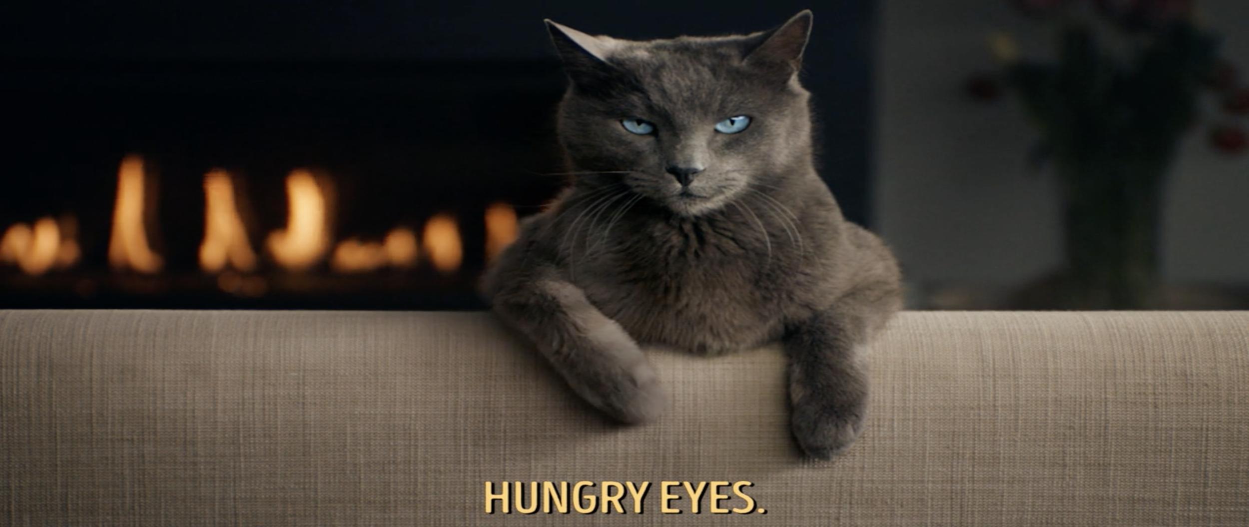 Sheba 'Hungry Eyes'