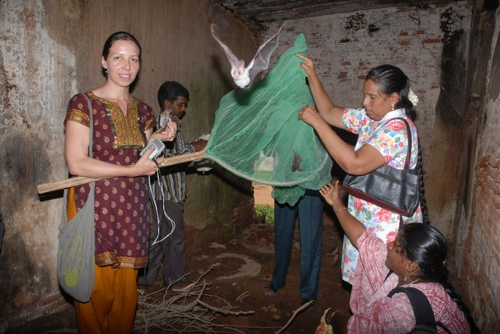 On the road in India, studying bats.