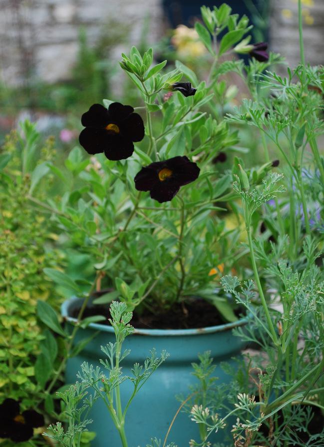 1-cottage flowers.JPG