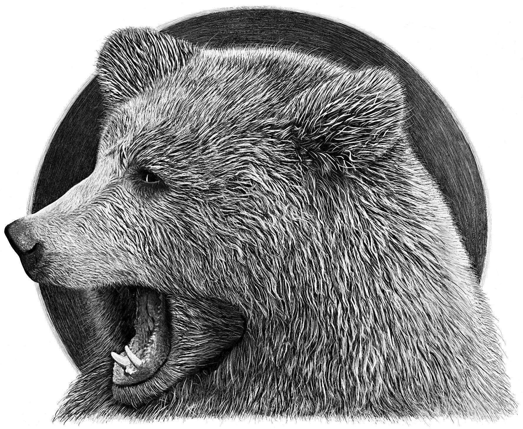Frederick Bear