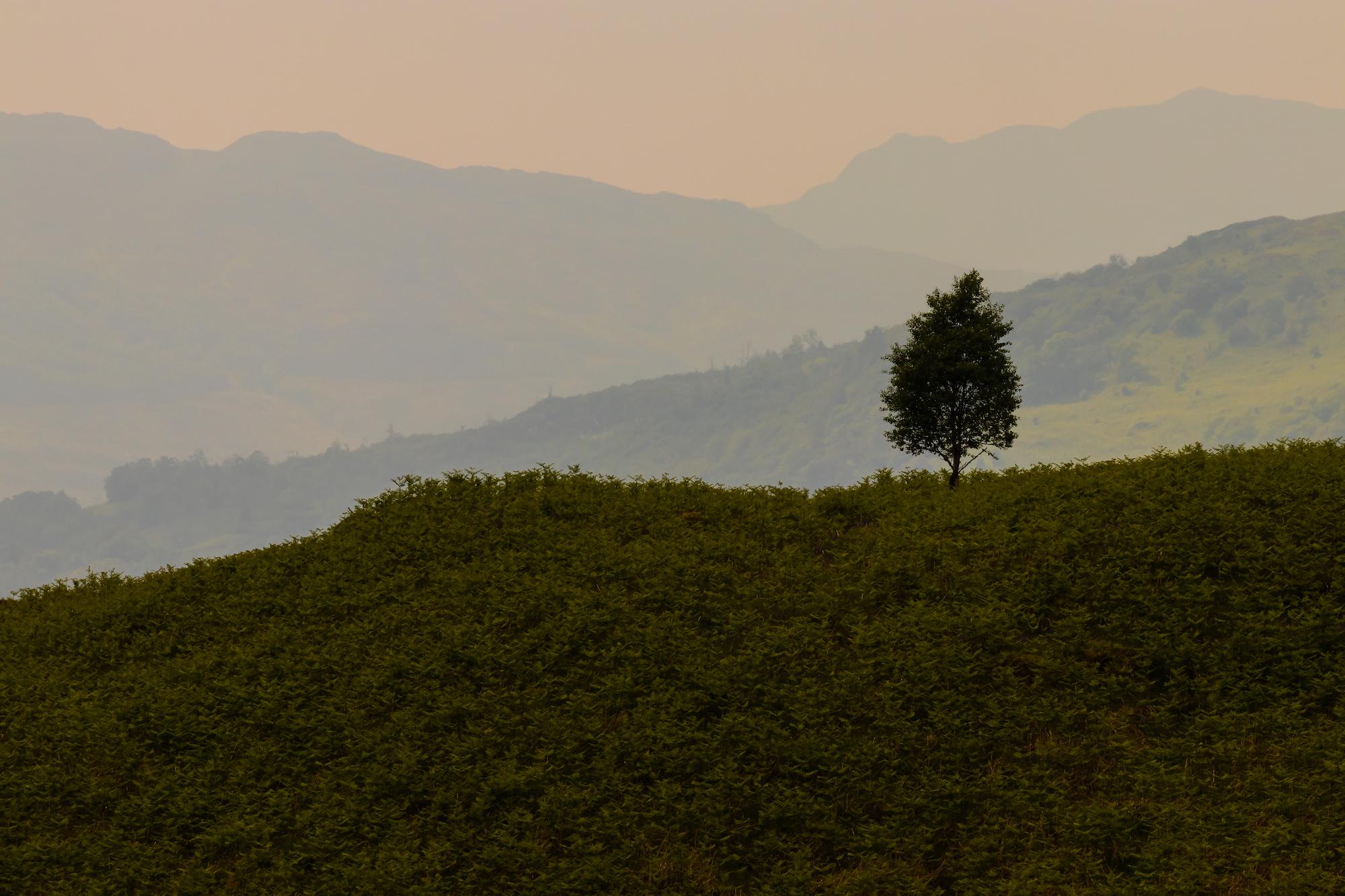 (1159) Tree Ardnamurchan, Scottish Highlands, Scotland.jpg