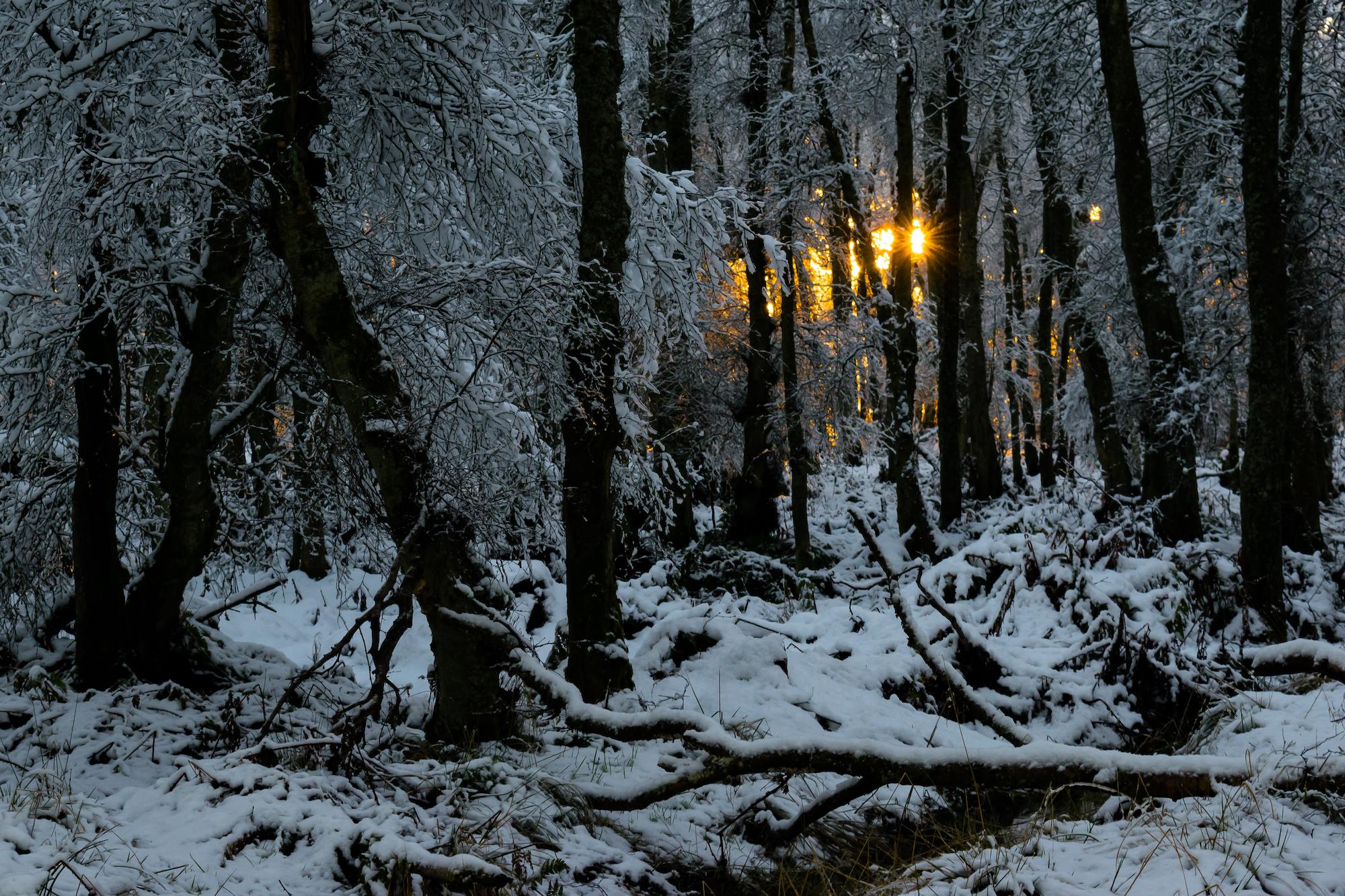 (941) Snow Sunset in Woodland, Harlaw, Pentland Hills, Edinburgh, Scotland.jpg