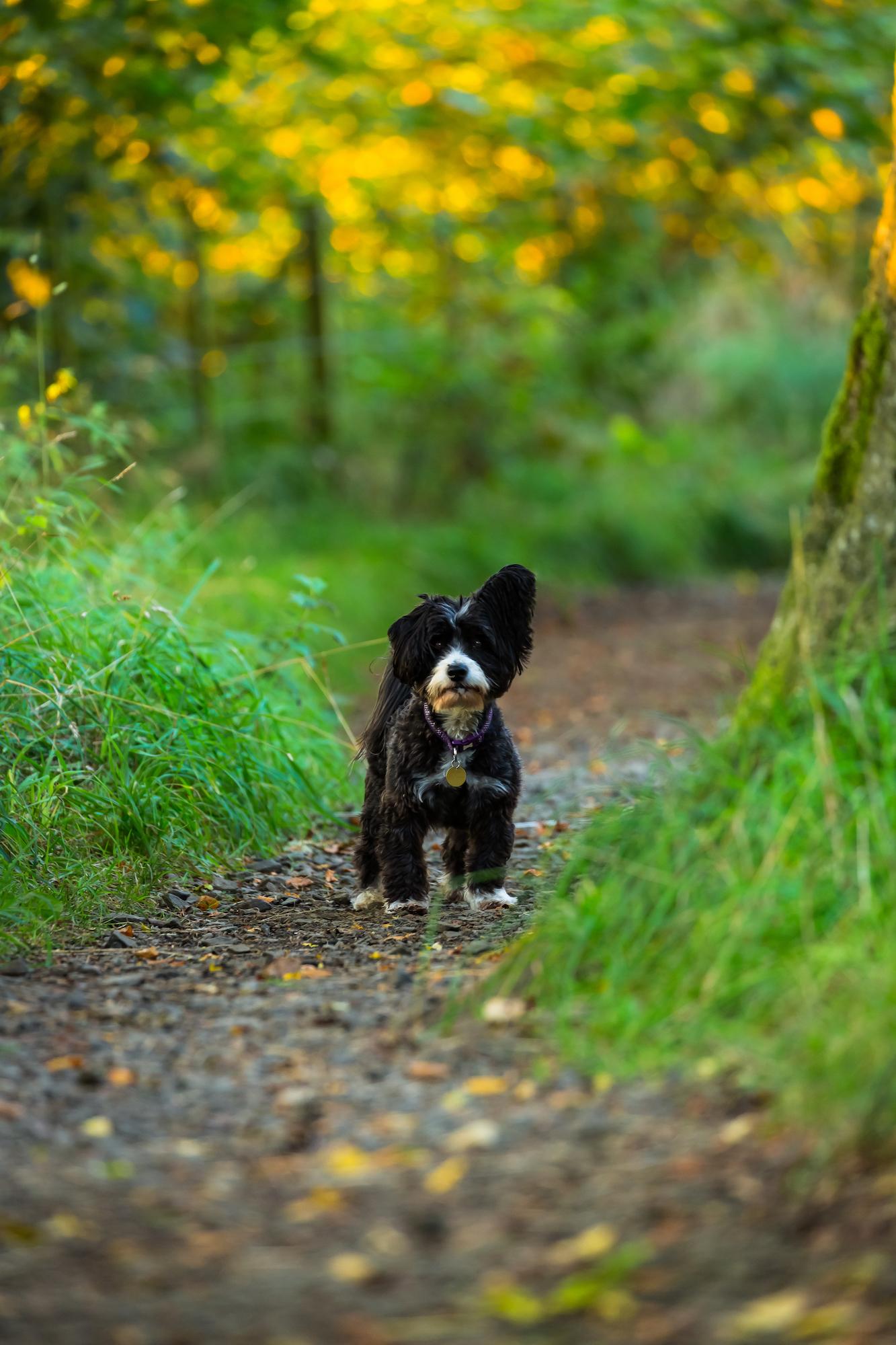(783) Autumn Walkies, Tormain Hill, Ratho, Edinburgh, Scotland.jpg