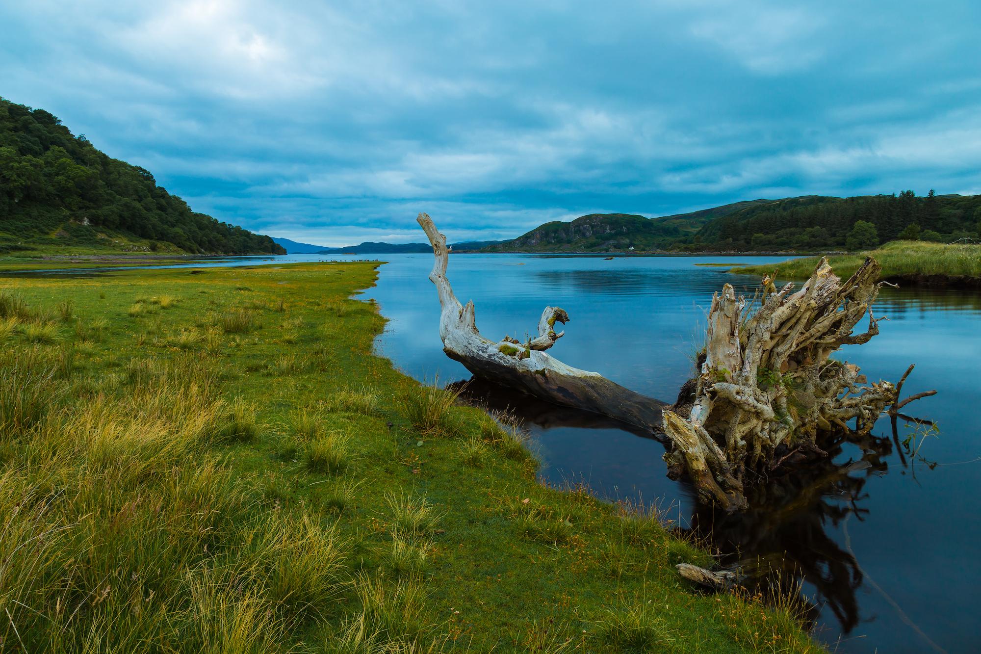 (211) Driftwood, Loch Feochan, Kilninver, Oban, Argyll & Bute, Scotland.jpg