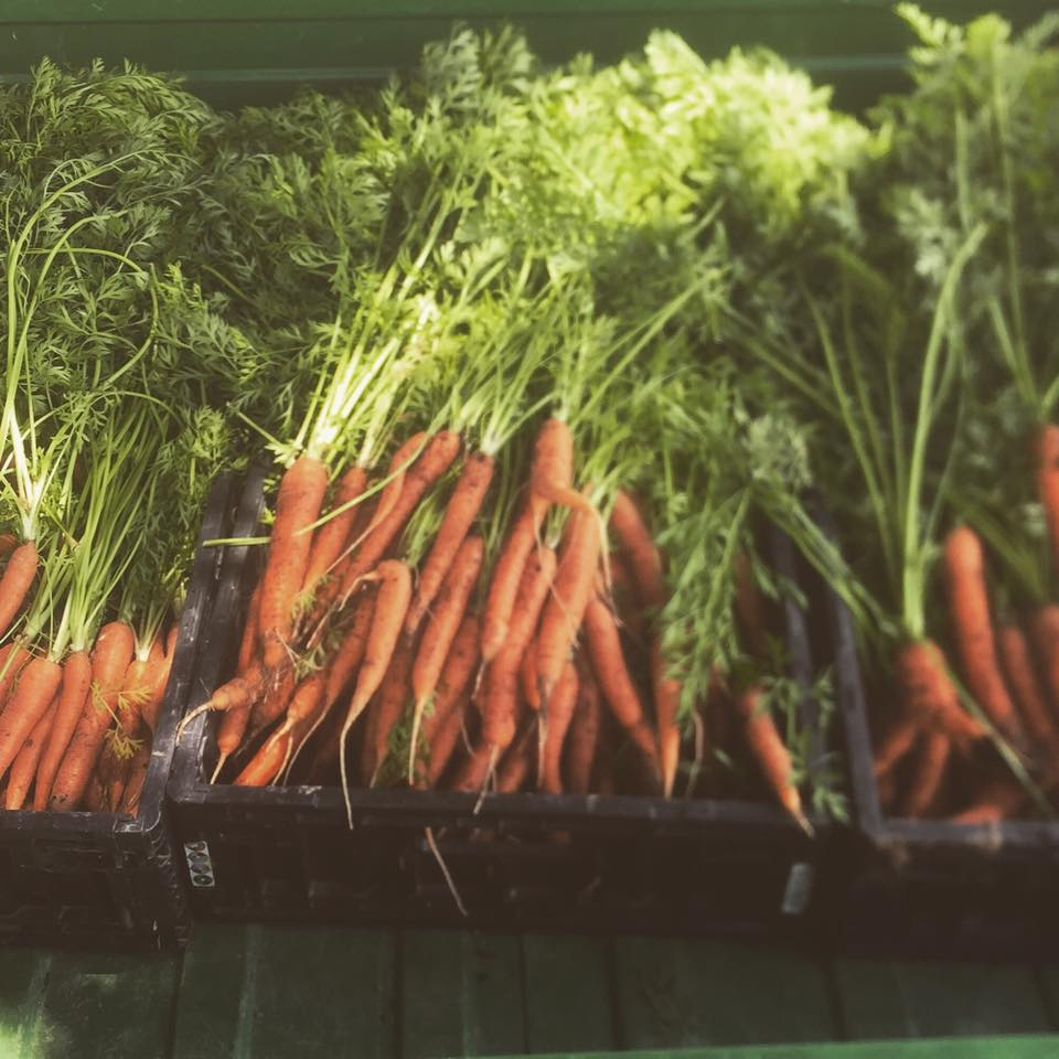 Carrots - Hittle Farms1.jpg