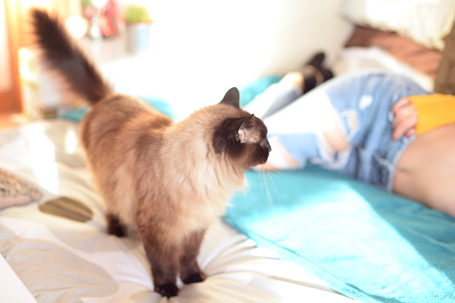Mr Fats the cat wasn't impressed that Shannon was in his spot! -