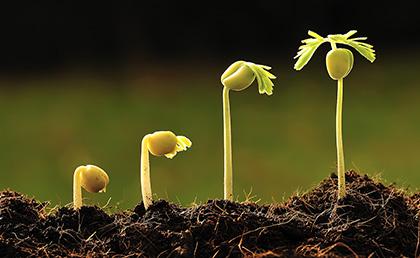 seed-start.jpg