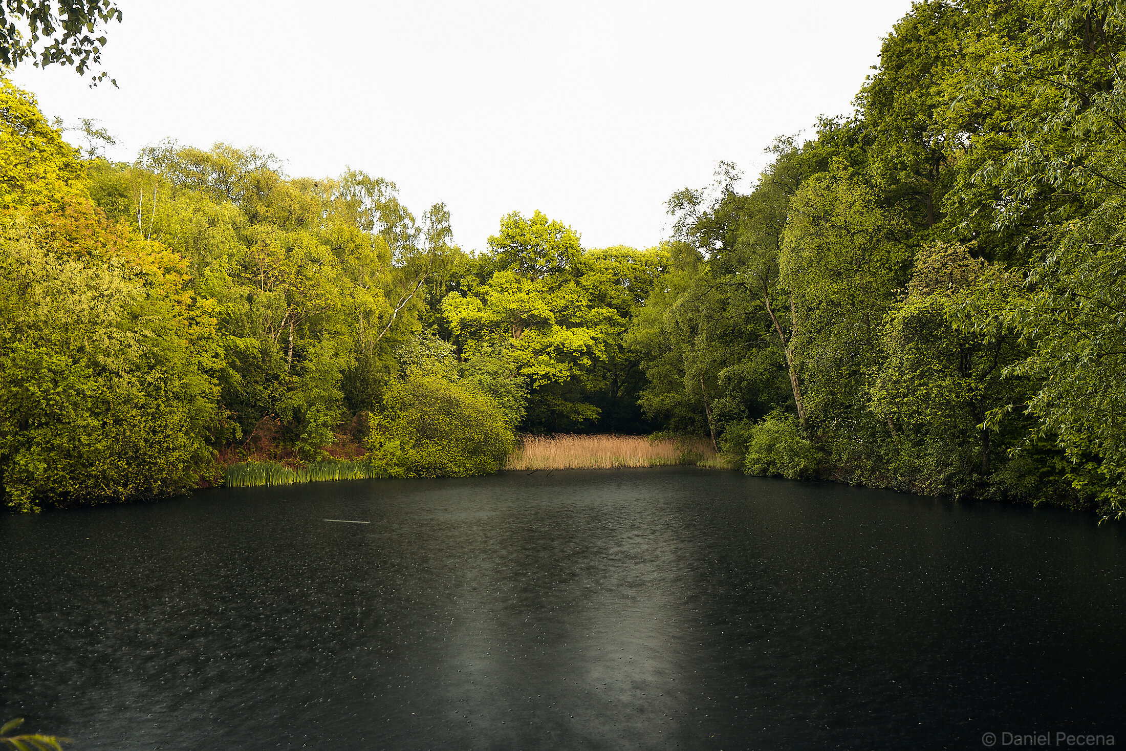 Hampstead Heath_London_The Leg of Mutton pond.jpg