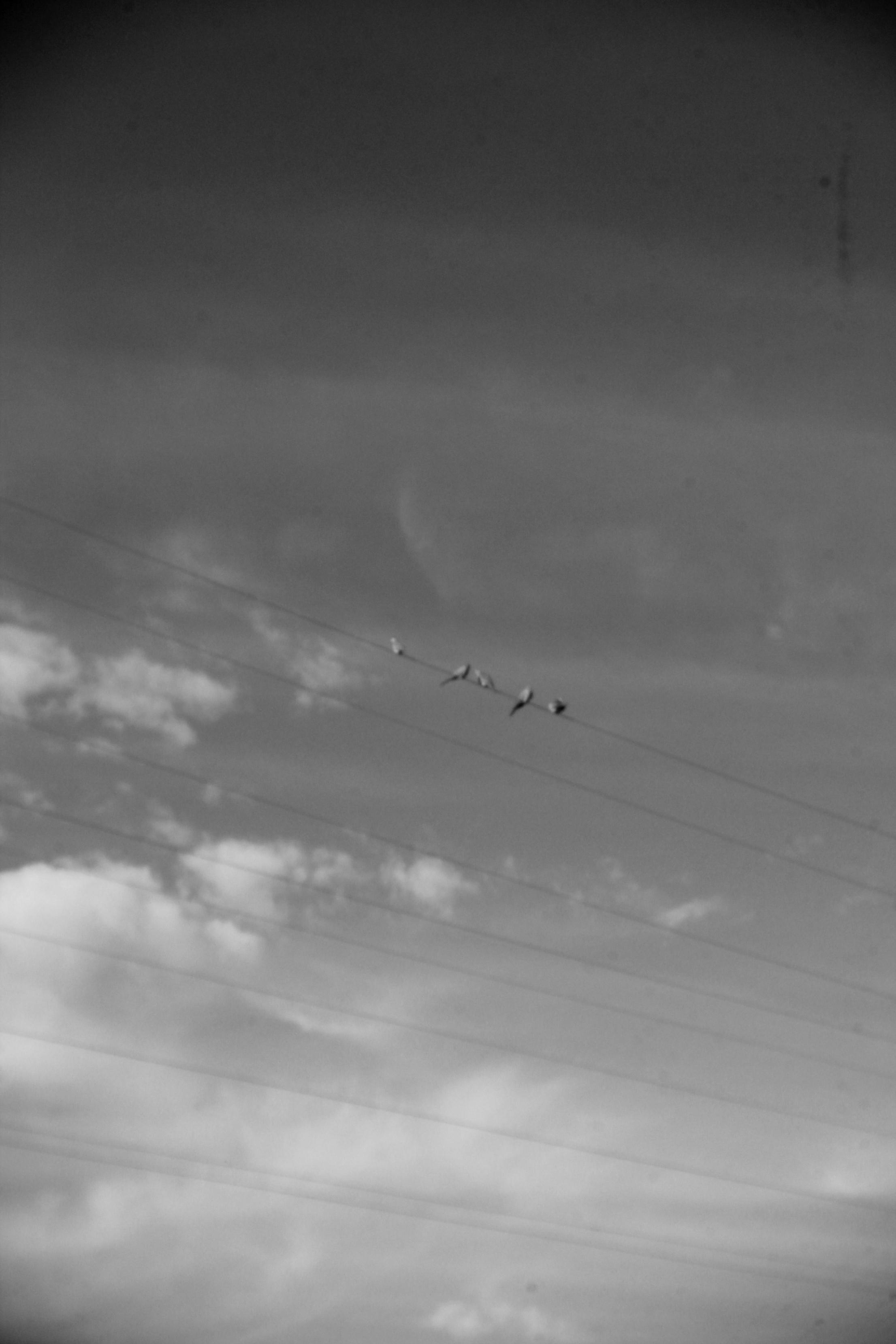 ritamaria_birds.jpg
