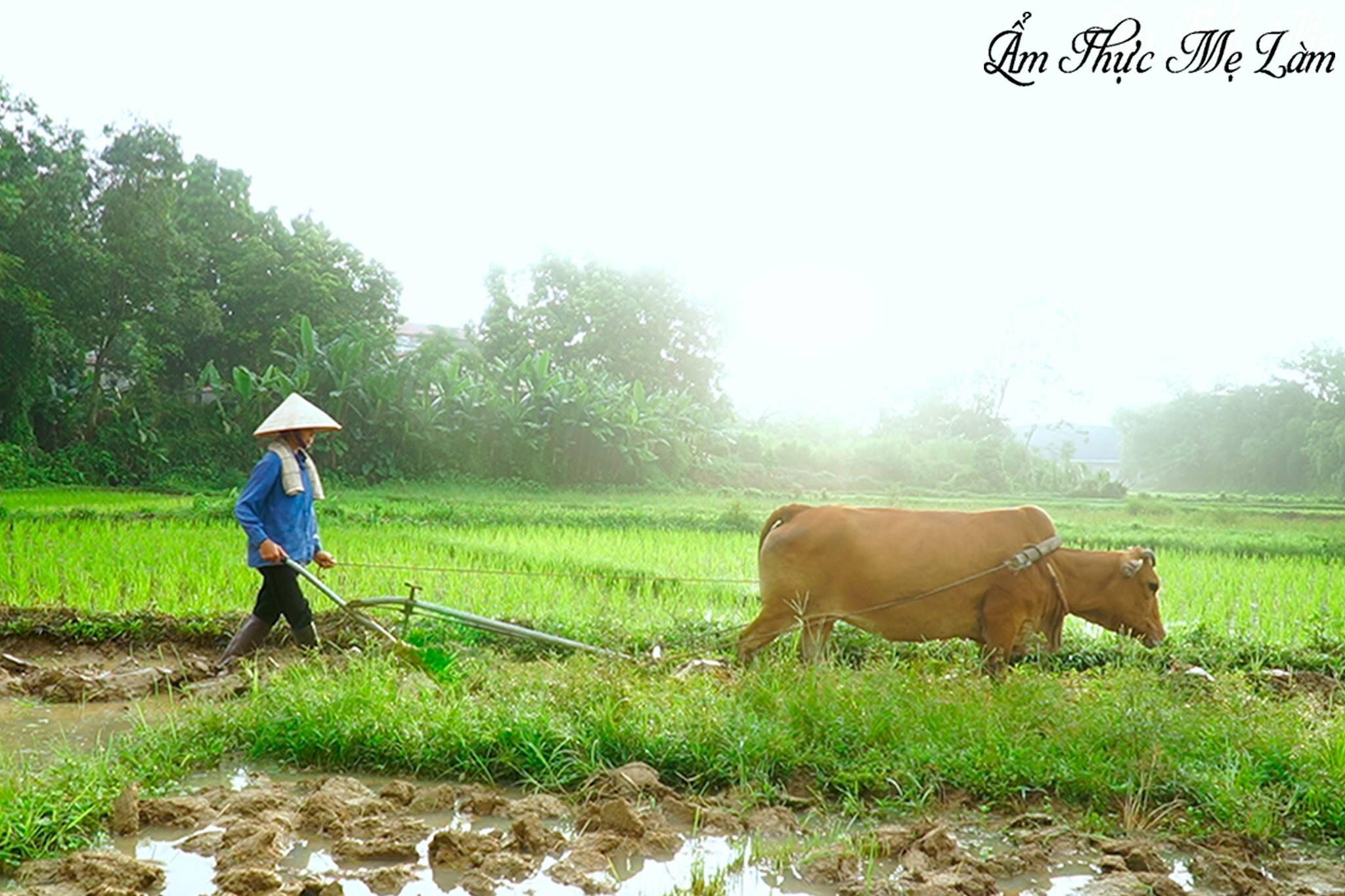 Ninh Tito Viet Nam 2