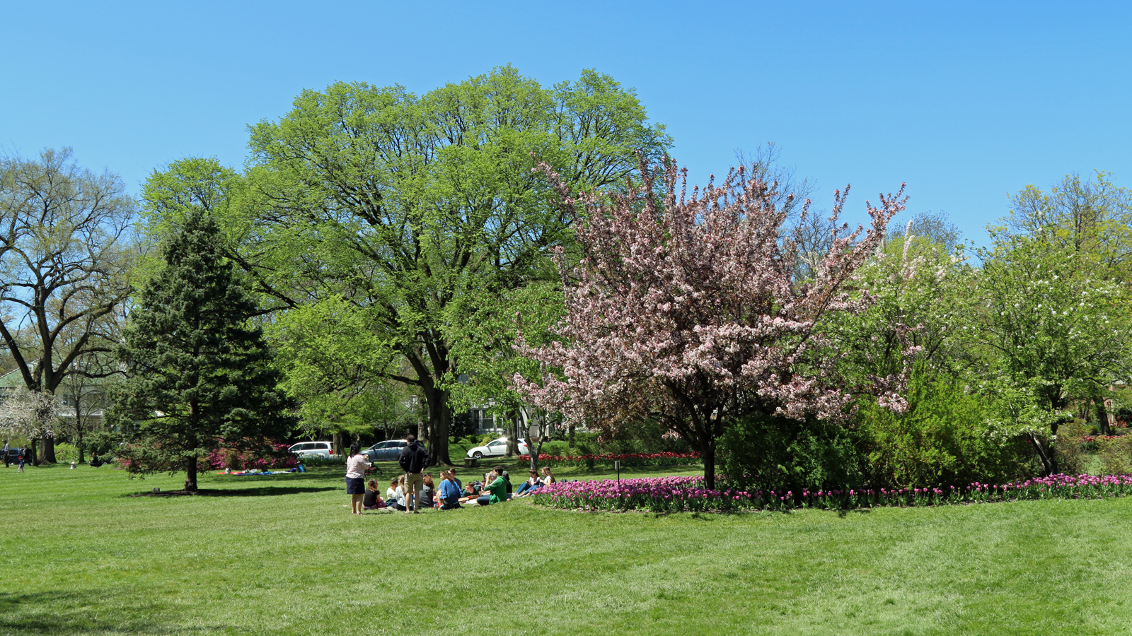 Far off view of a green lawn and people lounging at Sherwood Gardens in Baltimore
