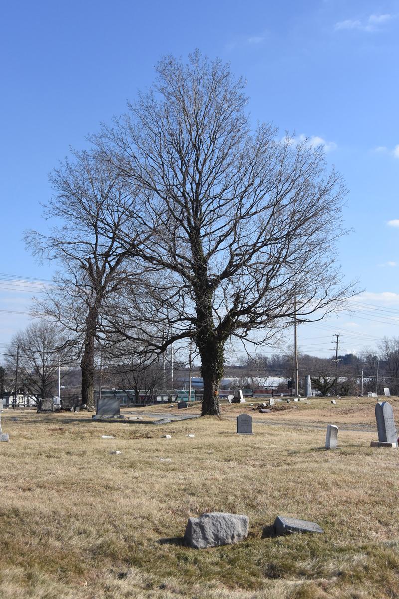 vertical tree.jpg
