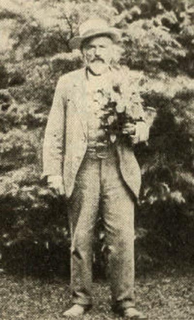 American Florist 29: 818 (Nov. 9, 1908)