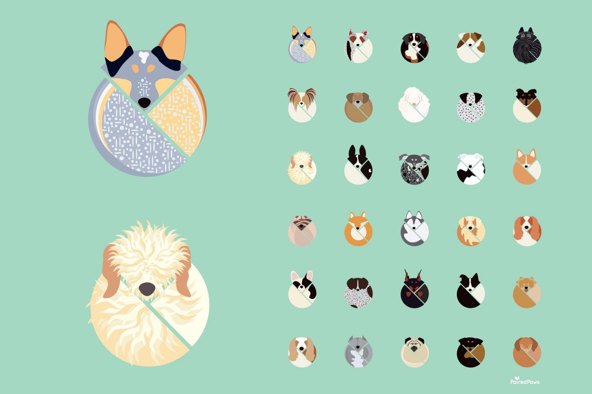 paired-paws-illustrations.jpg