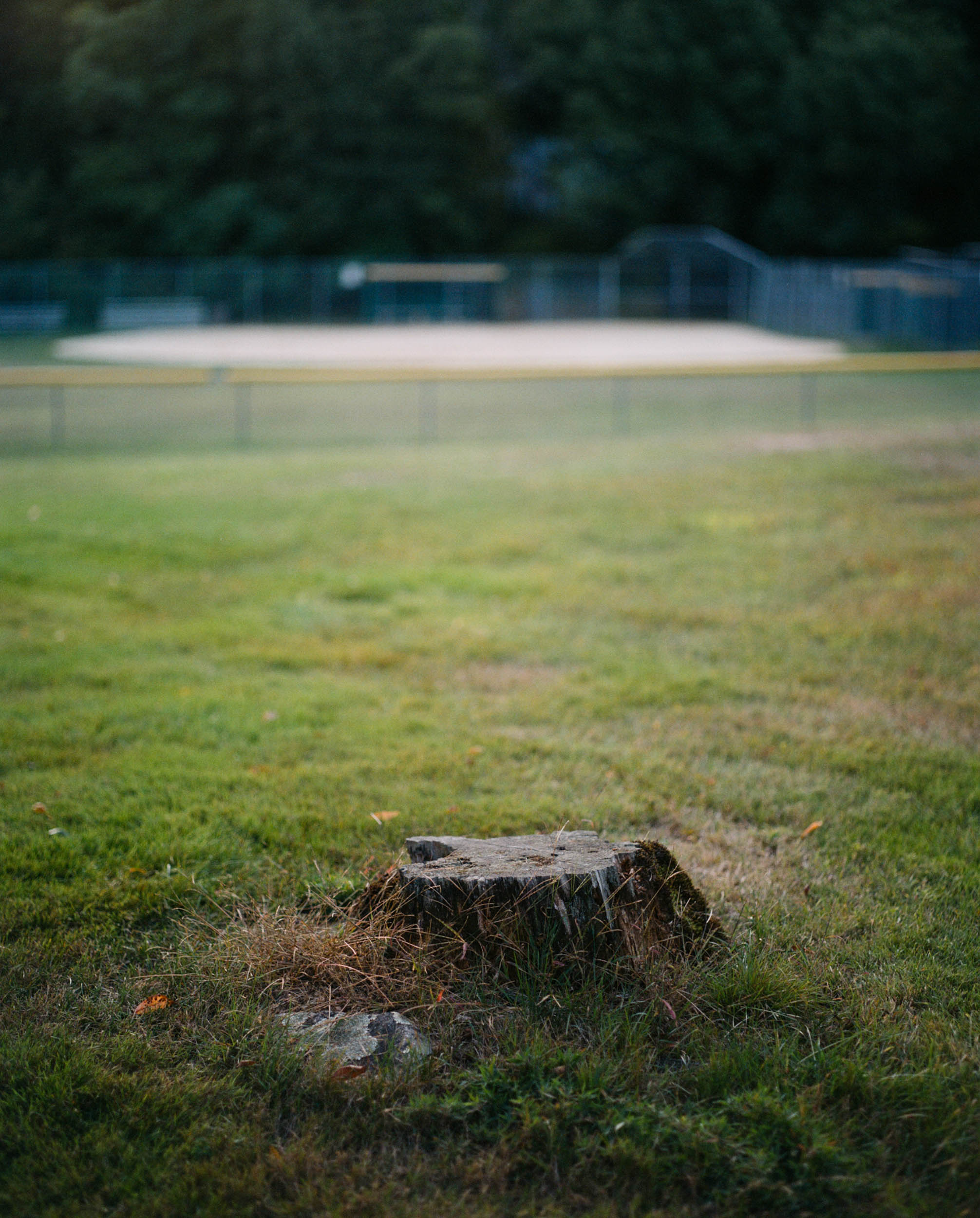 Not only did I live just steps away from the town's library, but I also was fortunate to have the town's baseball field as my backyard. For many summer nights growing up my brother and I would take turns sitting on this tree stump with perfect seats to watch the local youth baseball and softball teams play until the sun went down. If we were lucky we'd get to catch the occasional home run...