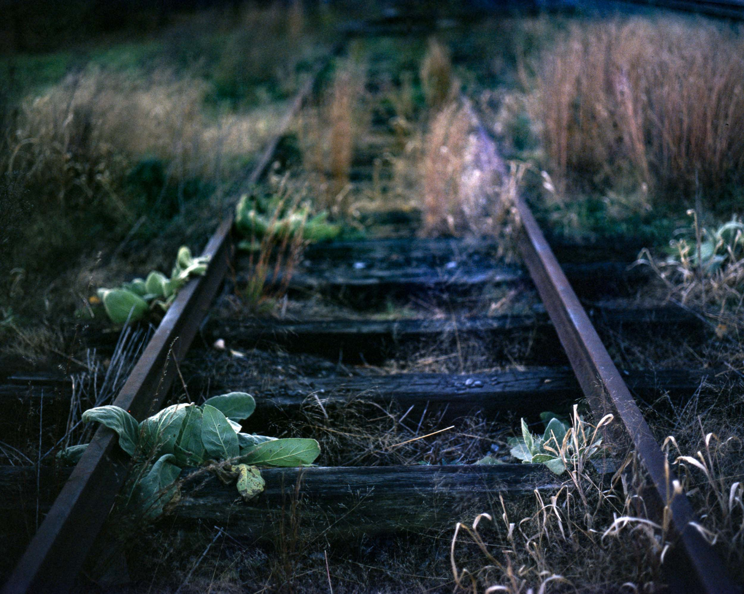 Some of my fondest memories as a child were walking along our towns numerous abandoned train tracks with my grand father, looking for loose rail road spikes to take home as a souvenir.