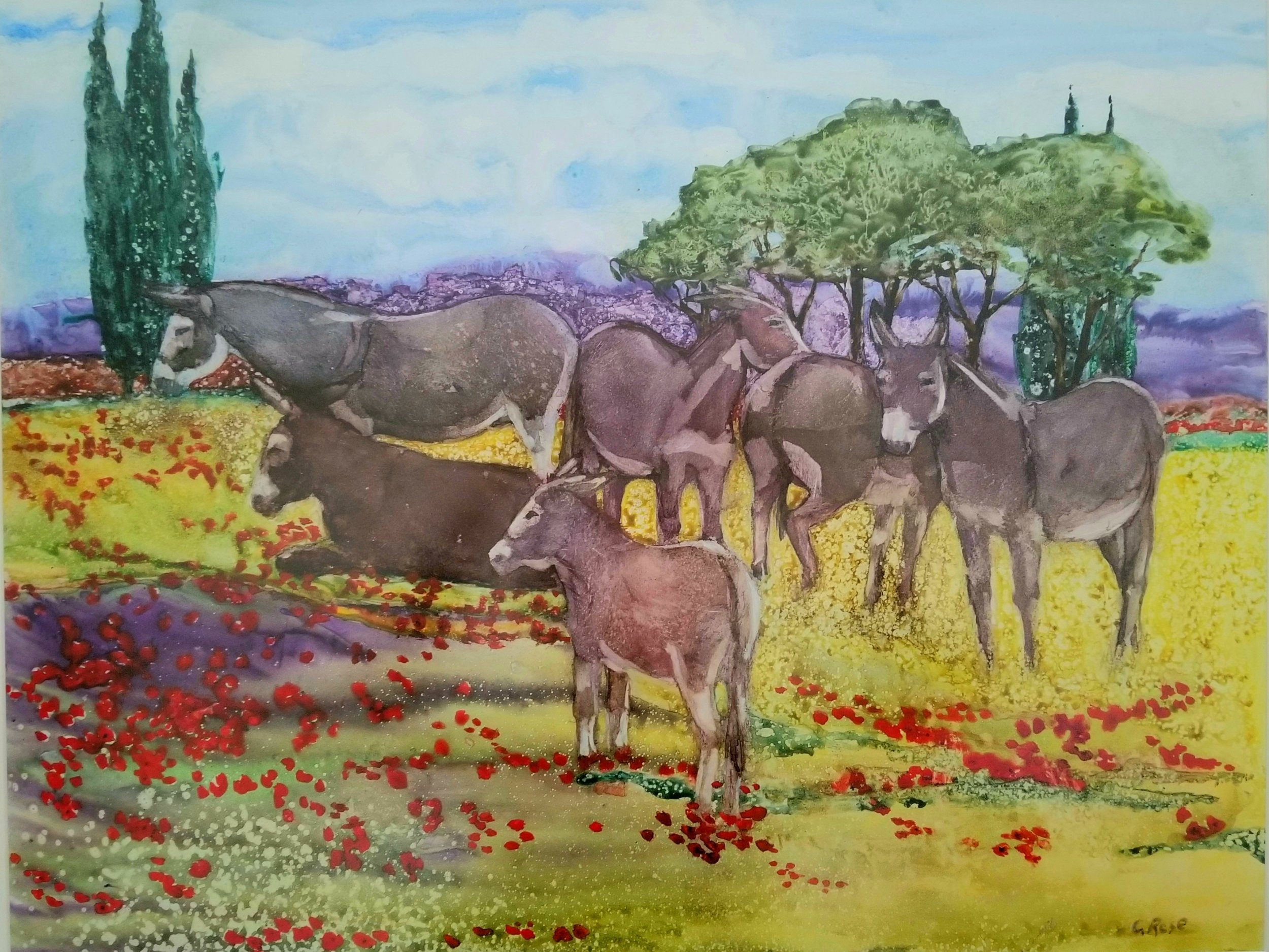 Burros of Provence