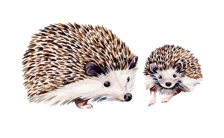 Sophie-Brabbins_Hedgehog.jpg