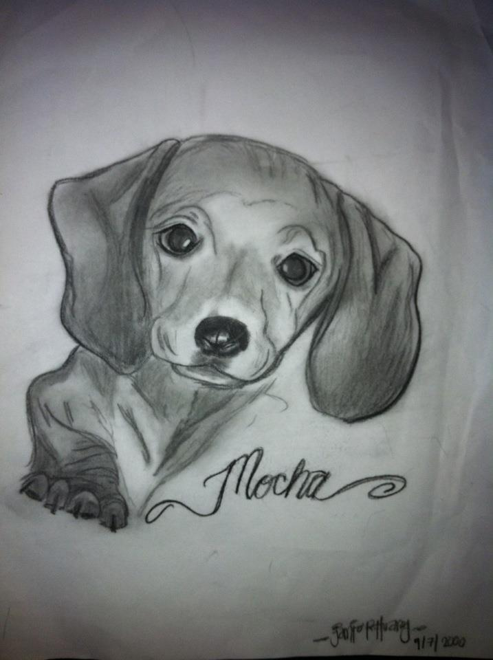 Drawing of our miniature dachshund, Mocha.