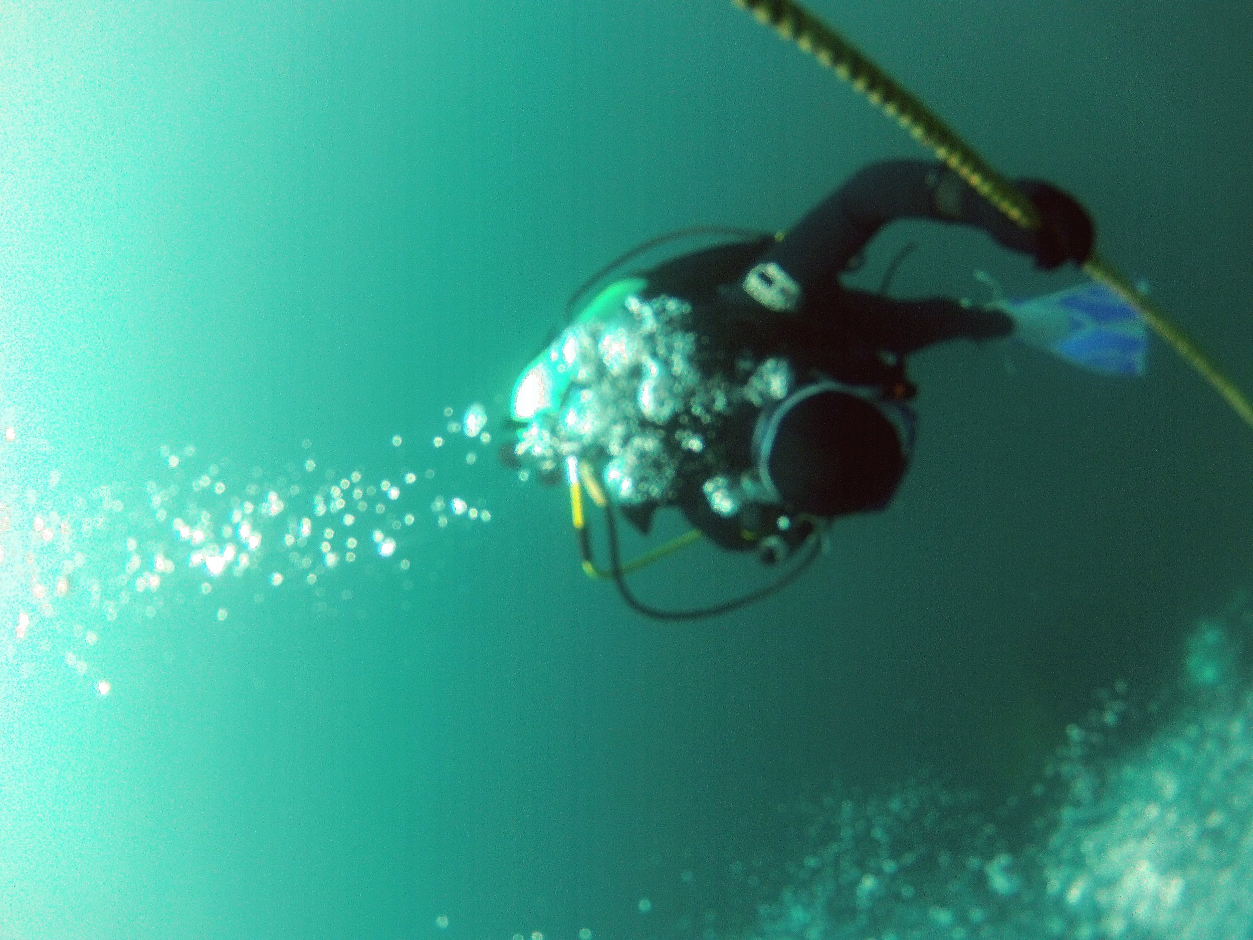 lone diver1.jpg