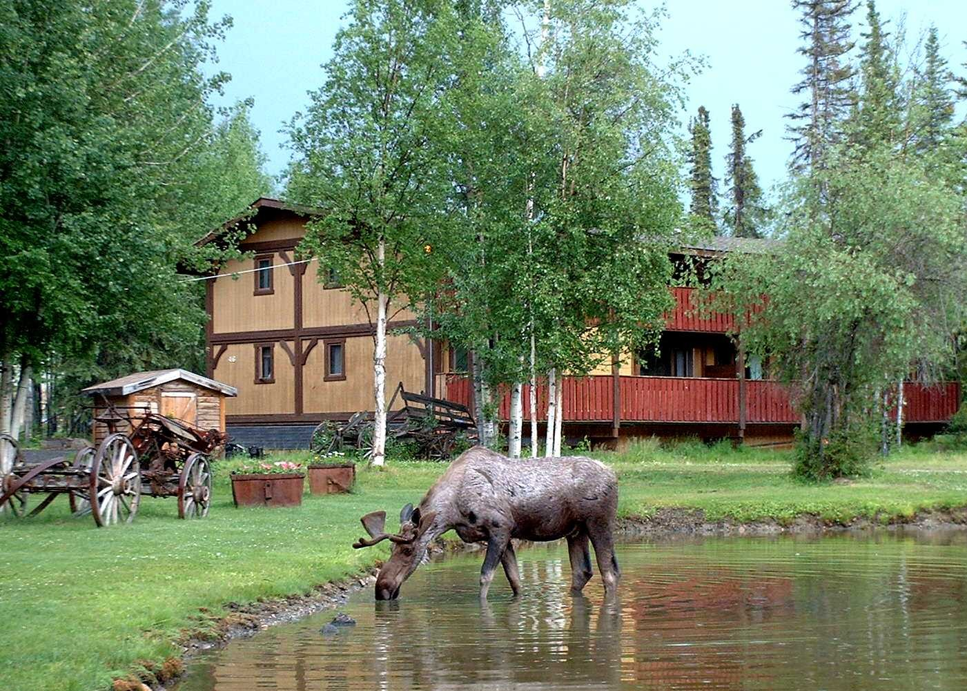 Moose with Family Suite.JPG