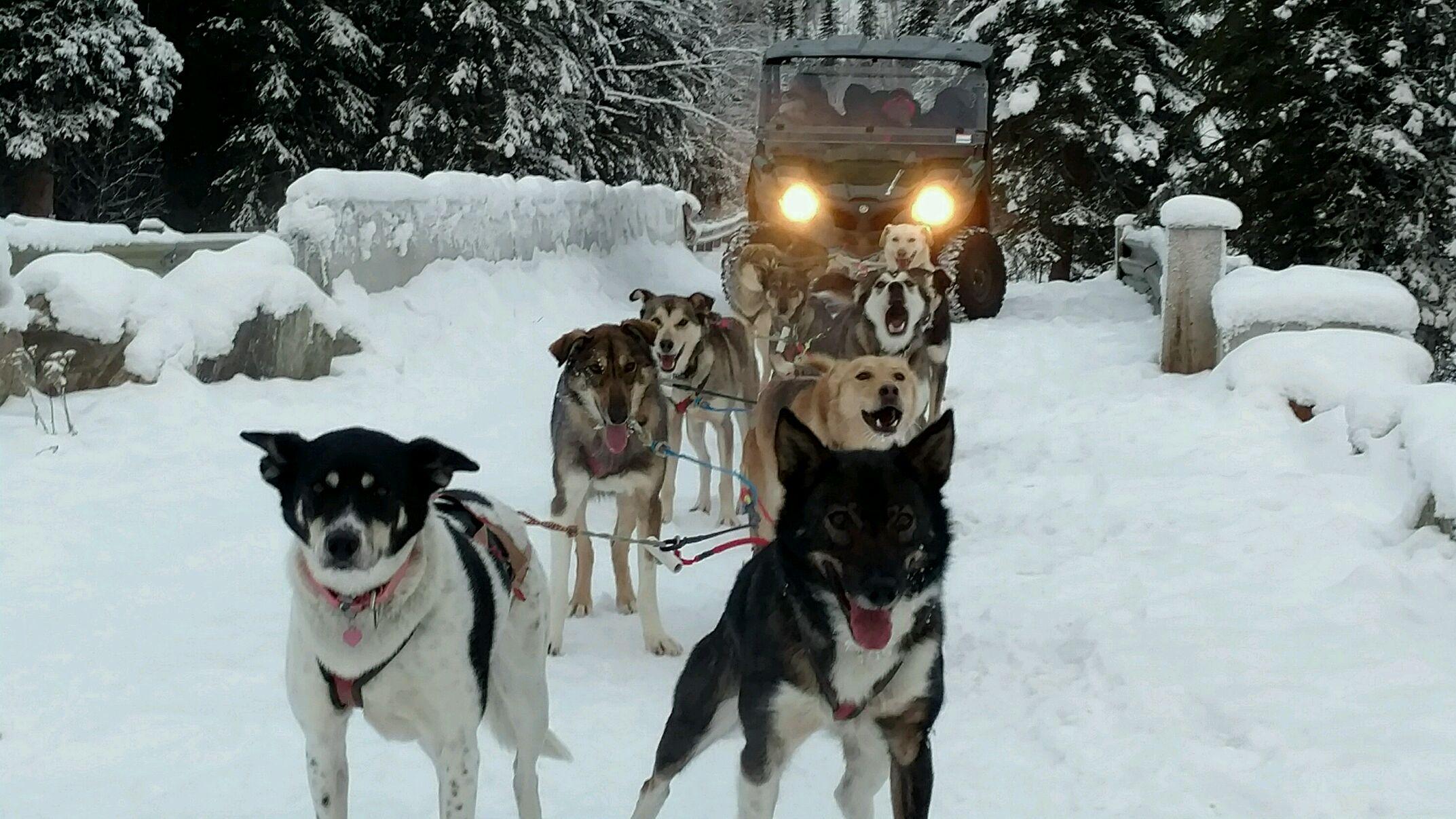 Kennel & Dog -