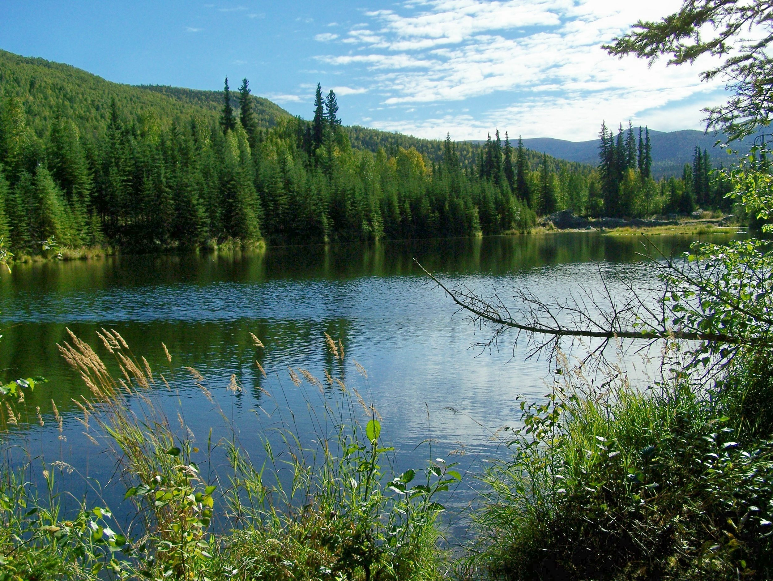beaver pond 1.jpg