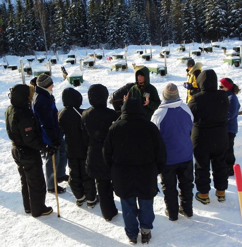 参观养狗场 - 英文解说驯养雪橇狗之种种细节。约40 分钟 - $20每人最少2 人方可成行