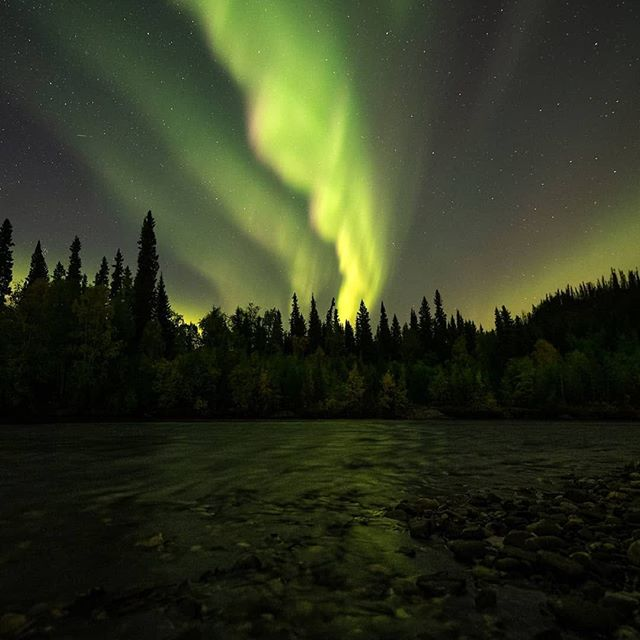 We are starting to slow down from the busy start of September we had, this Sunday we will not be fully booked for the first time in two weeks! We are going to have a relaxing time until Thanksgiving, auroras will still be making their way most nights, hopefully, we get to see them!⠀ ⠀ ⠀ Reposting @cnlastro⠀ 🍁 #autumn #auroraborealis #Northernlights #astrophotography #Fairbanks #Alaska #explorefairbanks #travelalaska #chenahotsprings #chsrphoto #aurora #AK #photography #sonyalpha #bealpha #sigmaphoto #kolarivision""