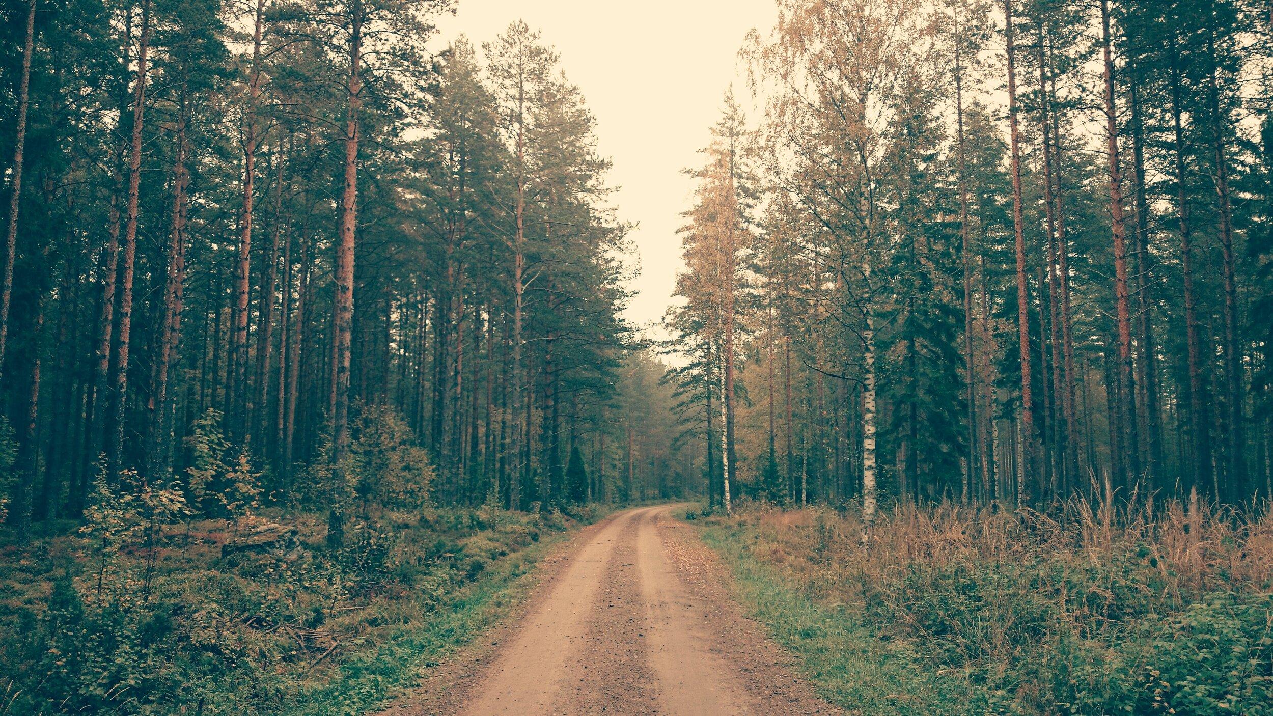 aforestation-dirt-road-dusty-road-52599.jpg