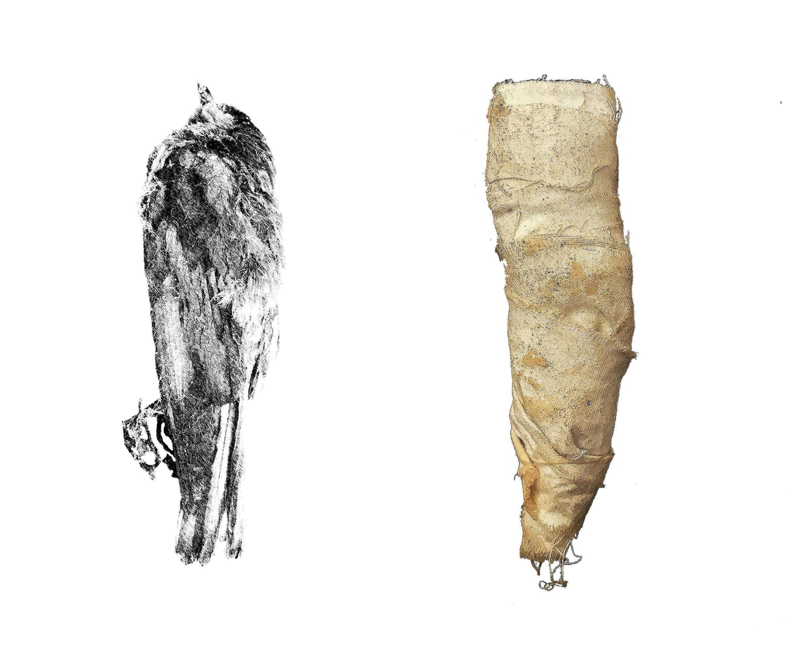 Roadrunner  The first votive animal mummies appear in the archeological record during the Third Intermediate Period. The more sophisticated linen indicates a slightly later period.  Dynasty 22 to Dynasty 27, 1075-404 B.C.E.  Animal Remains, Linen  14 x 4 x 6 in.