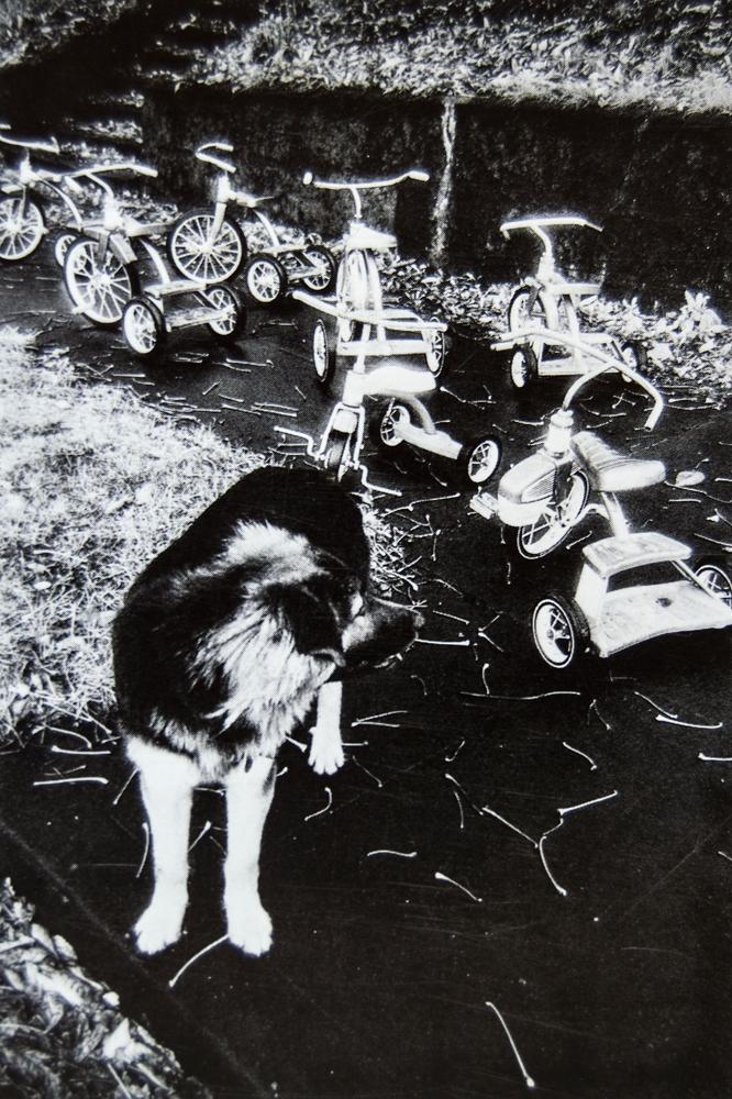 dogshowpostcards_2jpg.jpg