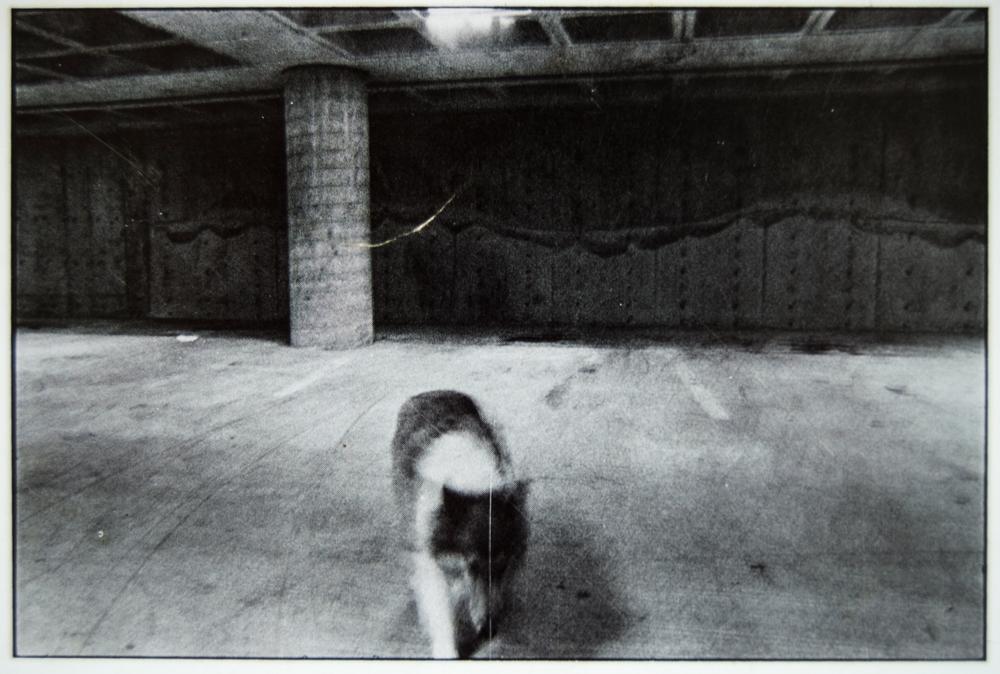 dogshowpostcards_3.jpg