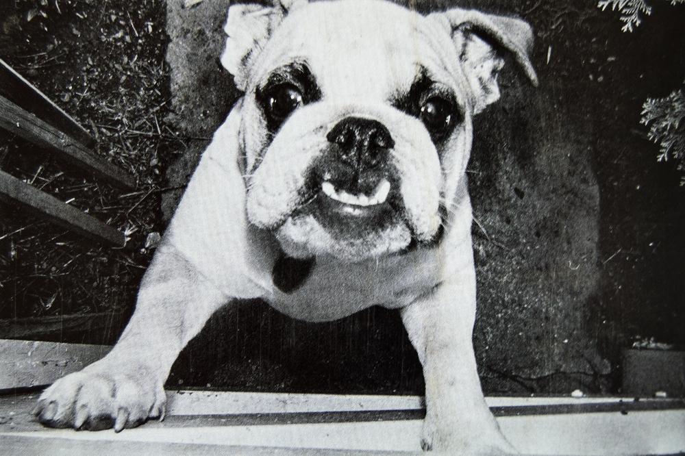 dogshowpostcards_4-1.jpg