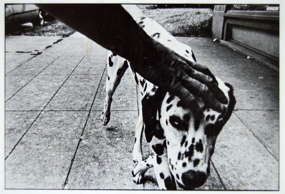 dogshowpostcards_4.jpg