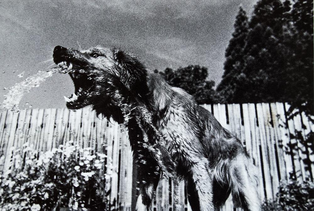 dogshowpostcards_6.jpg