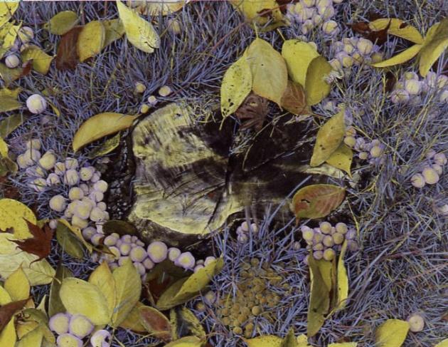 6957__630x500_last_fall_on_view_ridge.jpg