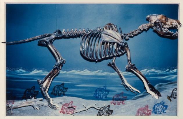 5212__630x500_mpeven-triceratopsstampede-1981-1982.jpg
