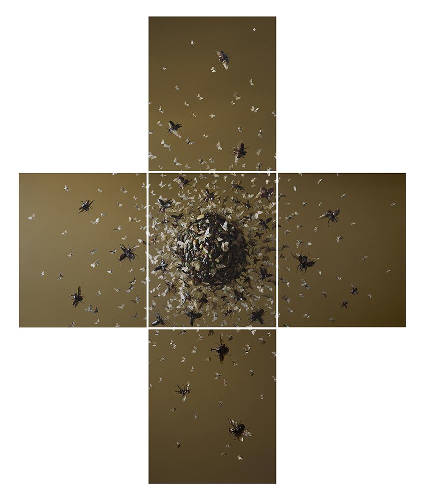 Tara Sellios,  No. 12,  2017. Digital chromogenic print.