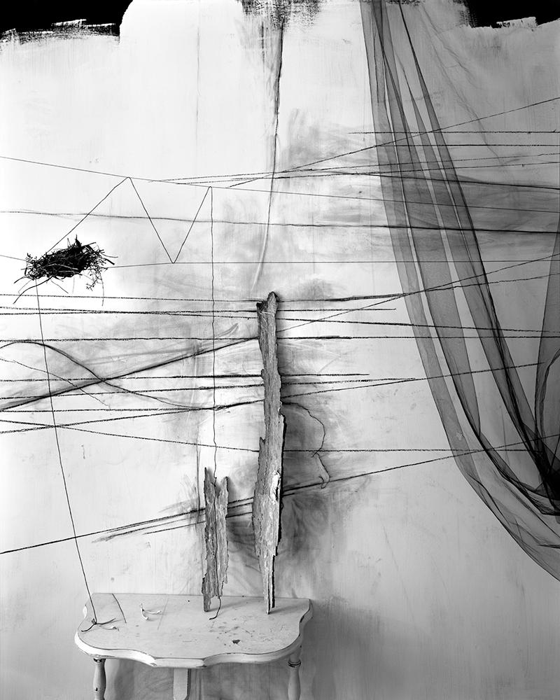 Lauren Semivan,  Wishbones,  2011. Archival pigment print.