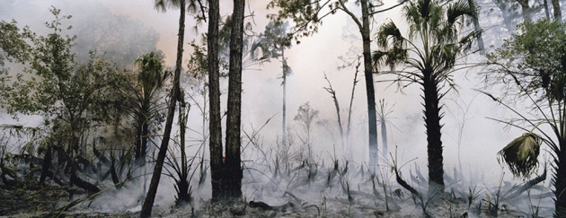 4956__630x500_kglaser_fireswamp-1-2007.jpg