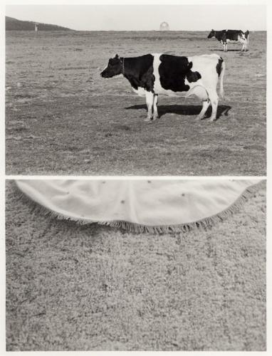 5060__630x500_moldenhauer-cowcarpet-1982-1985_.jpg