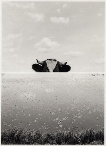 5061__630x500_moldenhauer-cowpond-1982-1985_.jpg
