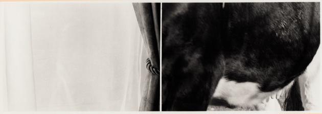 5062__630x500_moldenhauer-curtaincow-1982-1985_.jpg